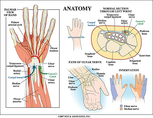 Wrist Anatomy 3